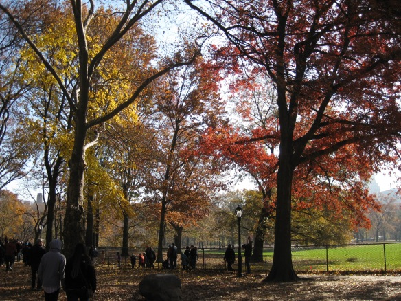 more fall foliage in Central Park