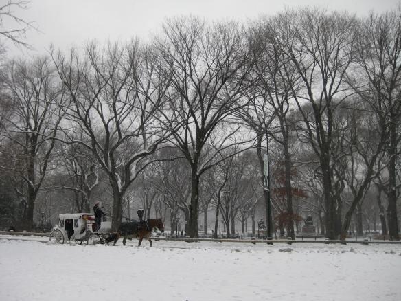 Central Park snow horses