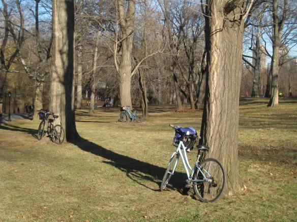 Central Park bicycles