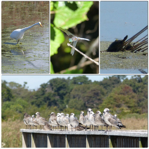 flora and fauna of Cape May