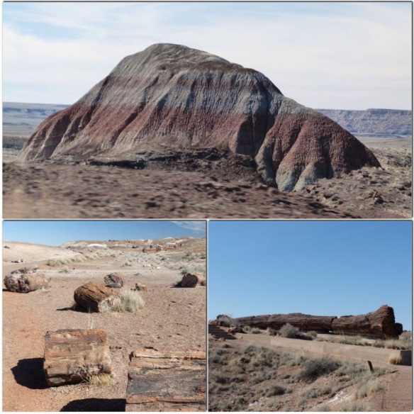 petrified forest views