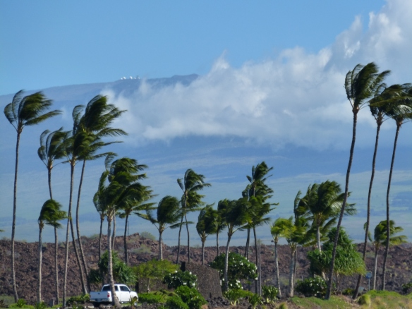 Lava rocks, palm trees and telescopes